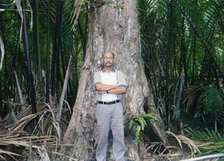 Mah-Meri-Nyireh-tree